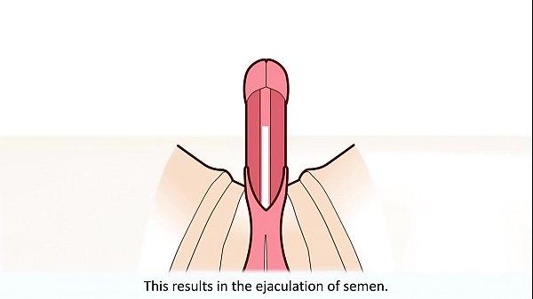 Butt finger masturbation movies