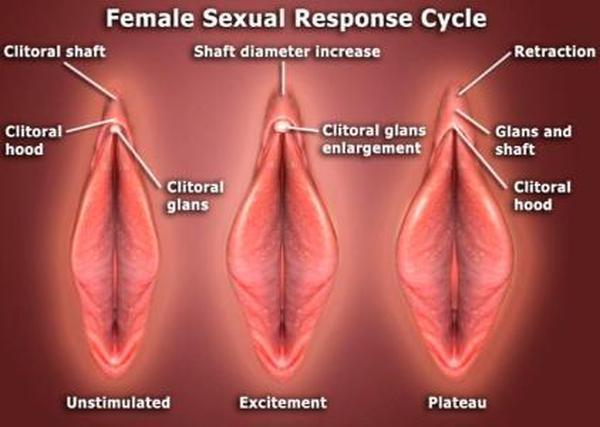 Understanding the male orgasm and arousal dynsfunction