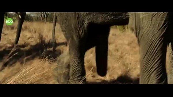 Elephant Party 2016 - Xvideoscom-6032