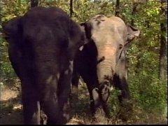 Selen in La Regina degli Elefanti (a.k.a. The Queen of Elephants) - Scene #1